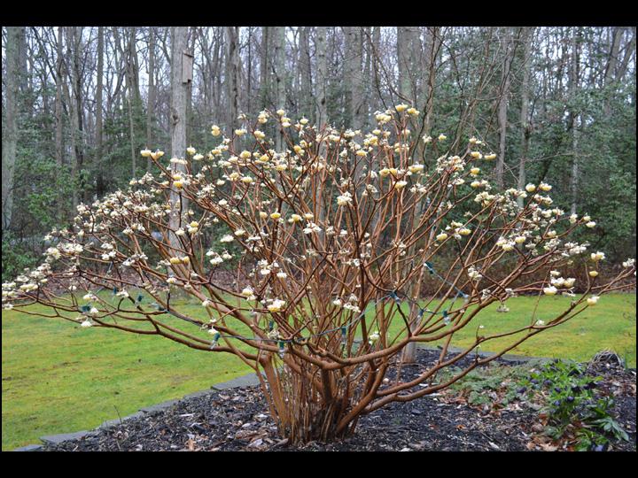 Winter Flowers - Winter Flowers